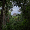 Tikal From Forest