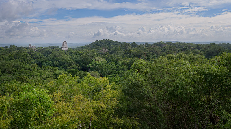Panoramic View of Tikal