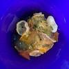 Summer Clam and cornichon tomato jelly