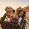 Grilled eggplant beignet