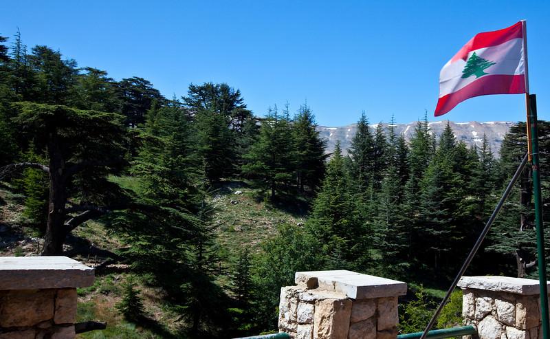 Cedar Forest  Qadisha Valley, Lebanon