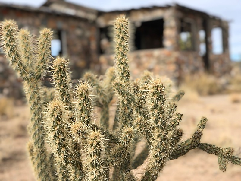 Cactus at Old House