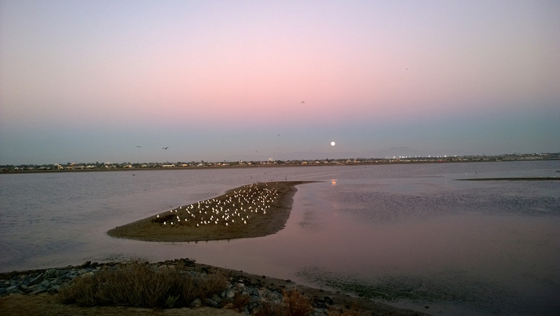 Full Moon rising over Bolsa Chica Wetlands