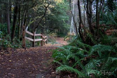 WM1FYJ_China_Lake_Nature_Area_Tacoma_Washington