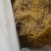 UPPER FALLS YELLOWSTONE GRAND CANYON
