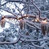 Acorns in lights