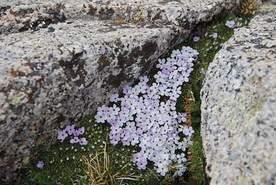 Wilflowers, Granite Boulders, Lichens
