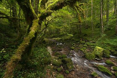La foresta maledetta