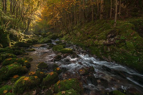 Sogno d'autunno