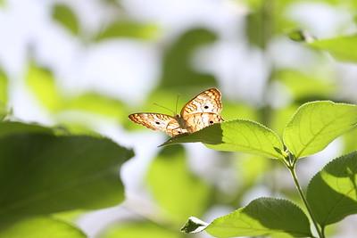 Butterfly Be Still