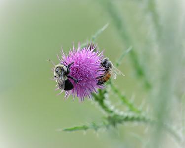 Bee a Team