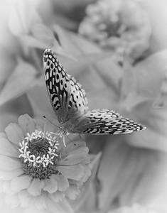 Black & White Attire