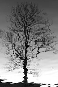 Reflection Tree