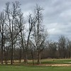 Un petit chevreuil sur le golf