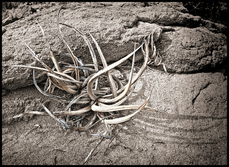 """""""If sticks could talk - Oh, the tales that would be told"""" - Grapevine Hills, Big Bend NP, TX"""