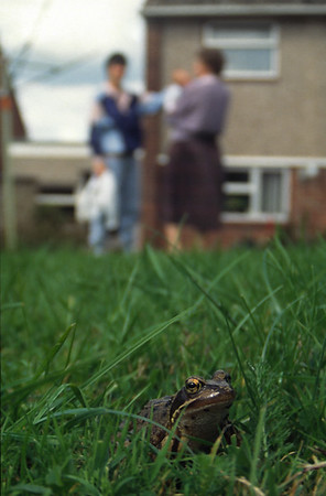 Frogs, Reptiles & Spiders