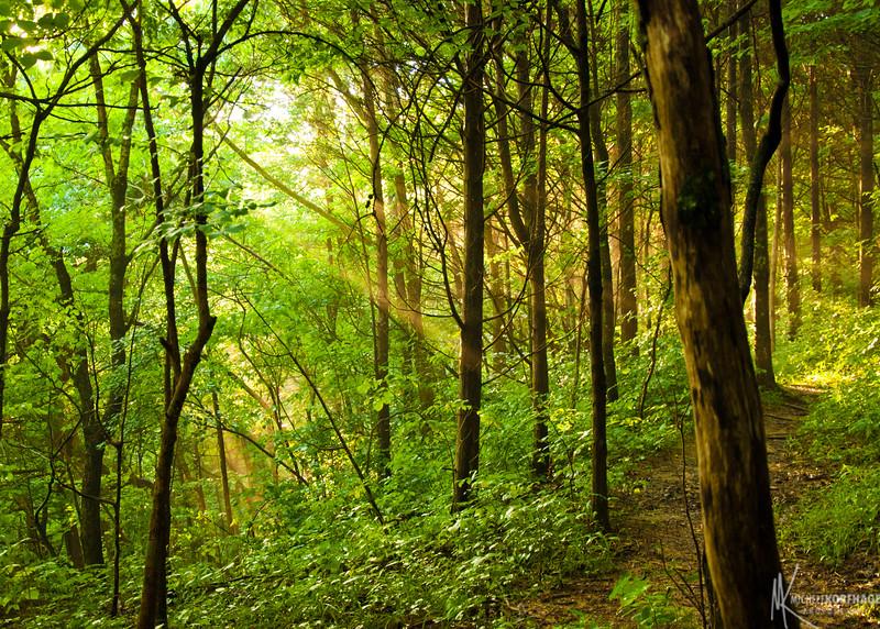 Sunbeam on the Trail