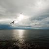 Peace in Flight