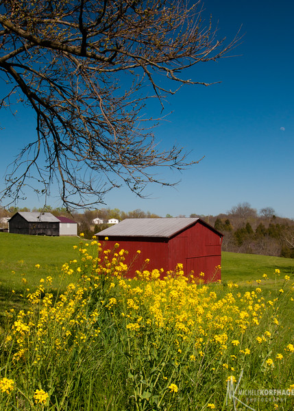 Kentucky in the Spring