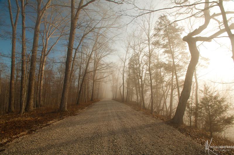 The Morning Fog