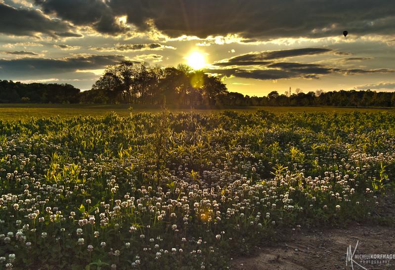 Sun Kissed Field