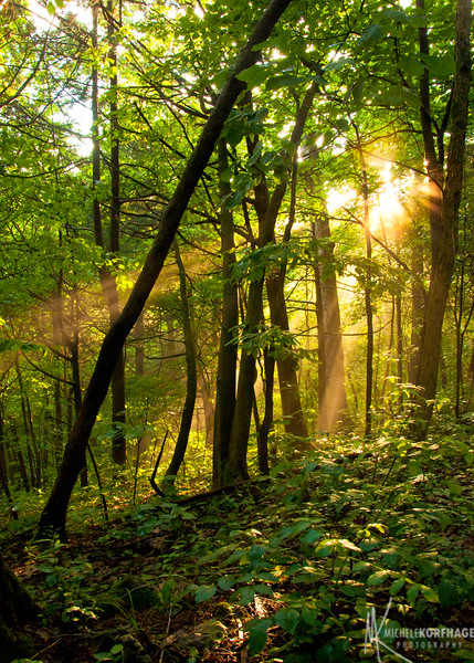 Sunbeams through the Woods