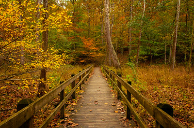 Brown County State Park Boardwalk