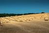le rapt wheat