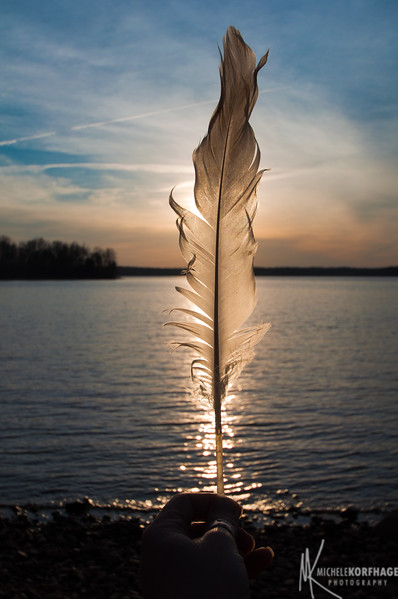 Sun Kissed Feather