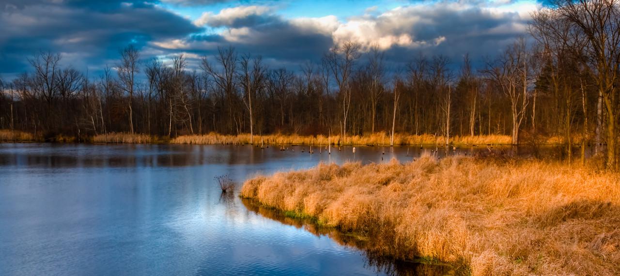 Magic Marsh