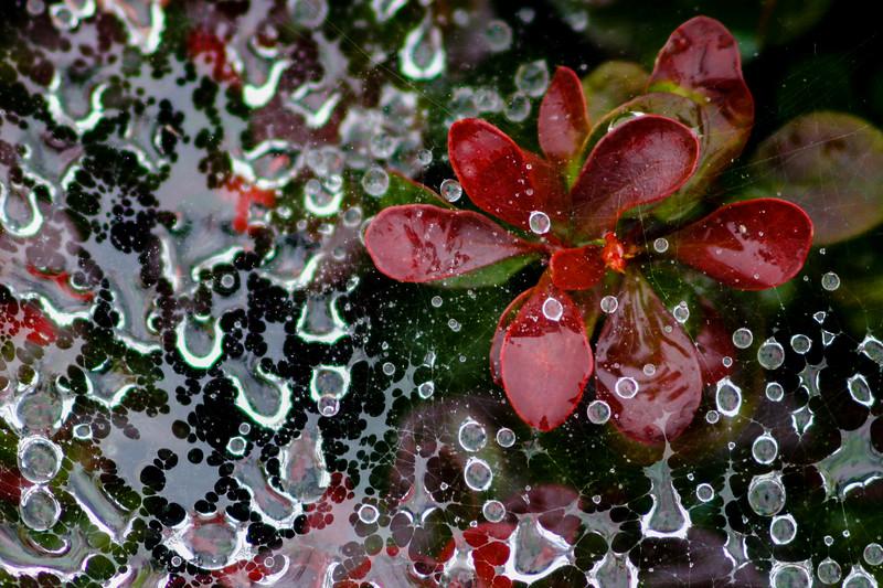 Web of Rain