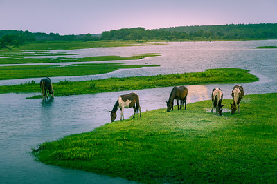Wild Ponies of Chincoteague #2