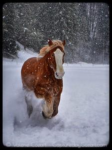 Triple D Winter Wildlife