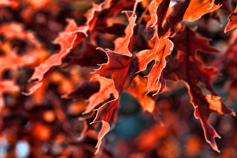 Fall leaves dancing