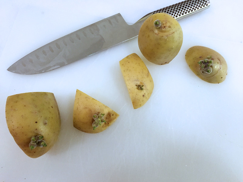 "Cut potato into 1"" pieces with one to two eyes."