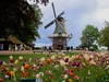 The windmill at Kuekenhof Gardens was a real working windmill built in 1892. Holland America Cruise Lines bought it in 1957, donated it and relocated it to the gardens.