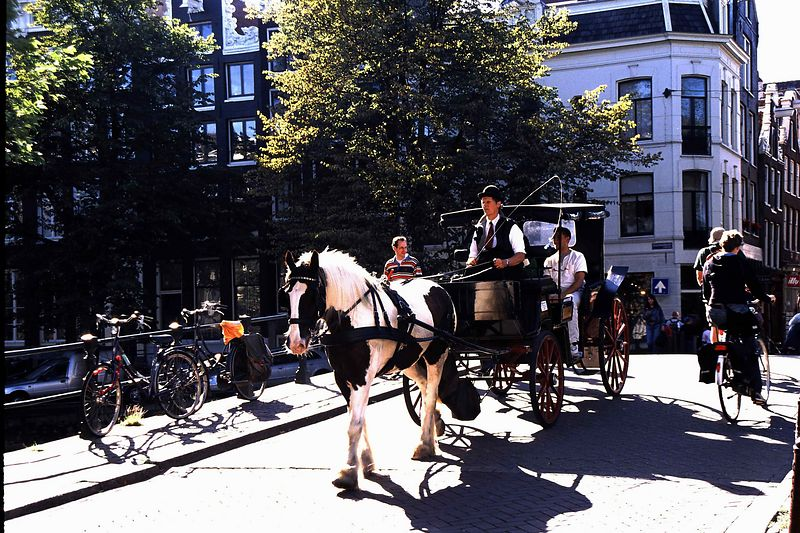 Amsterdam horse & carriage on bridge