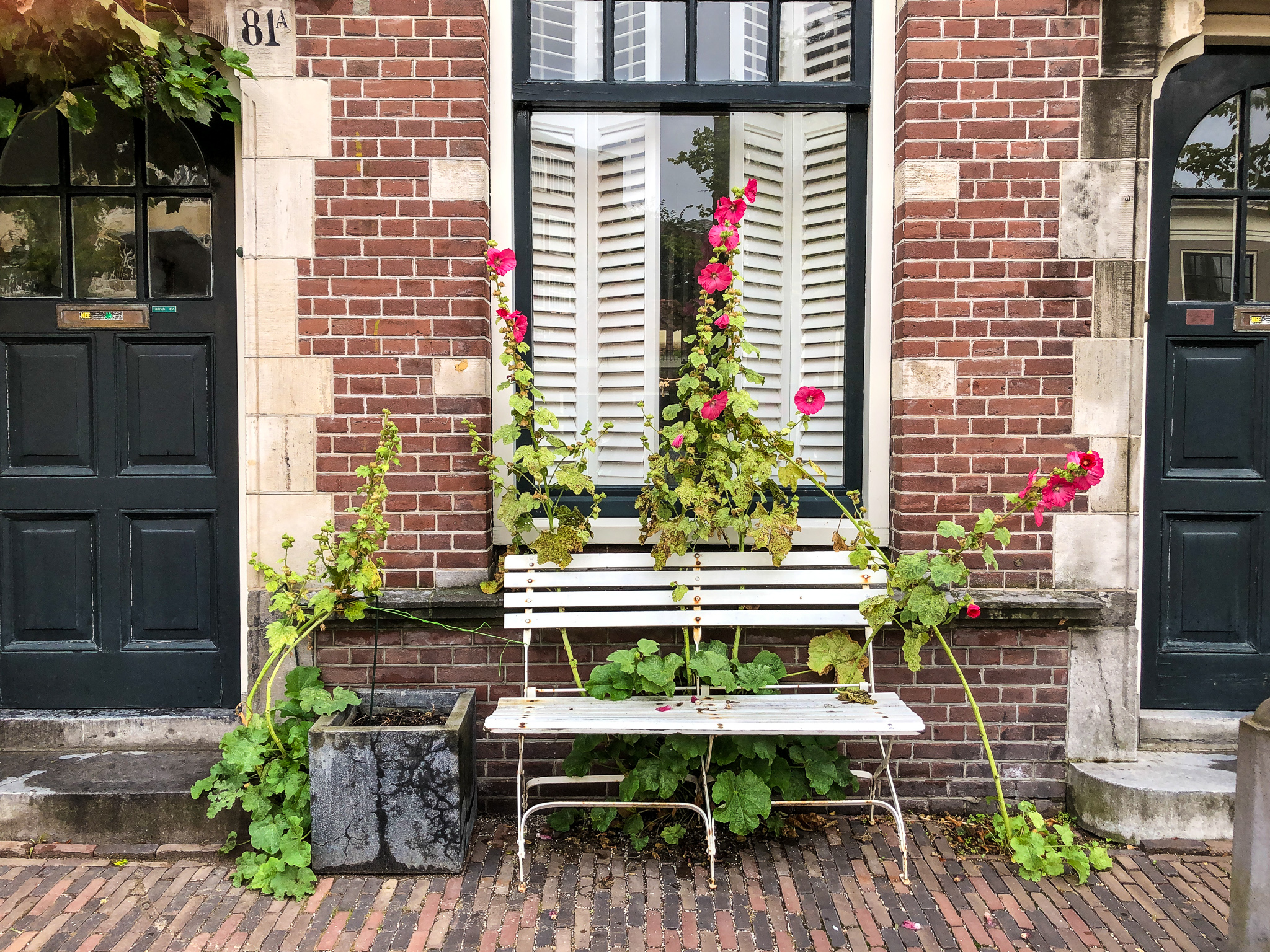 you'll see lots of flowers with day trips from amsterdam