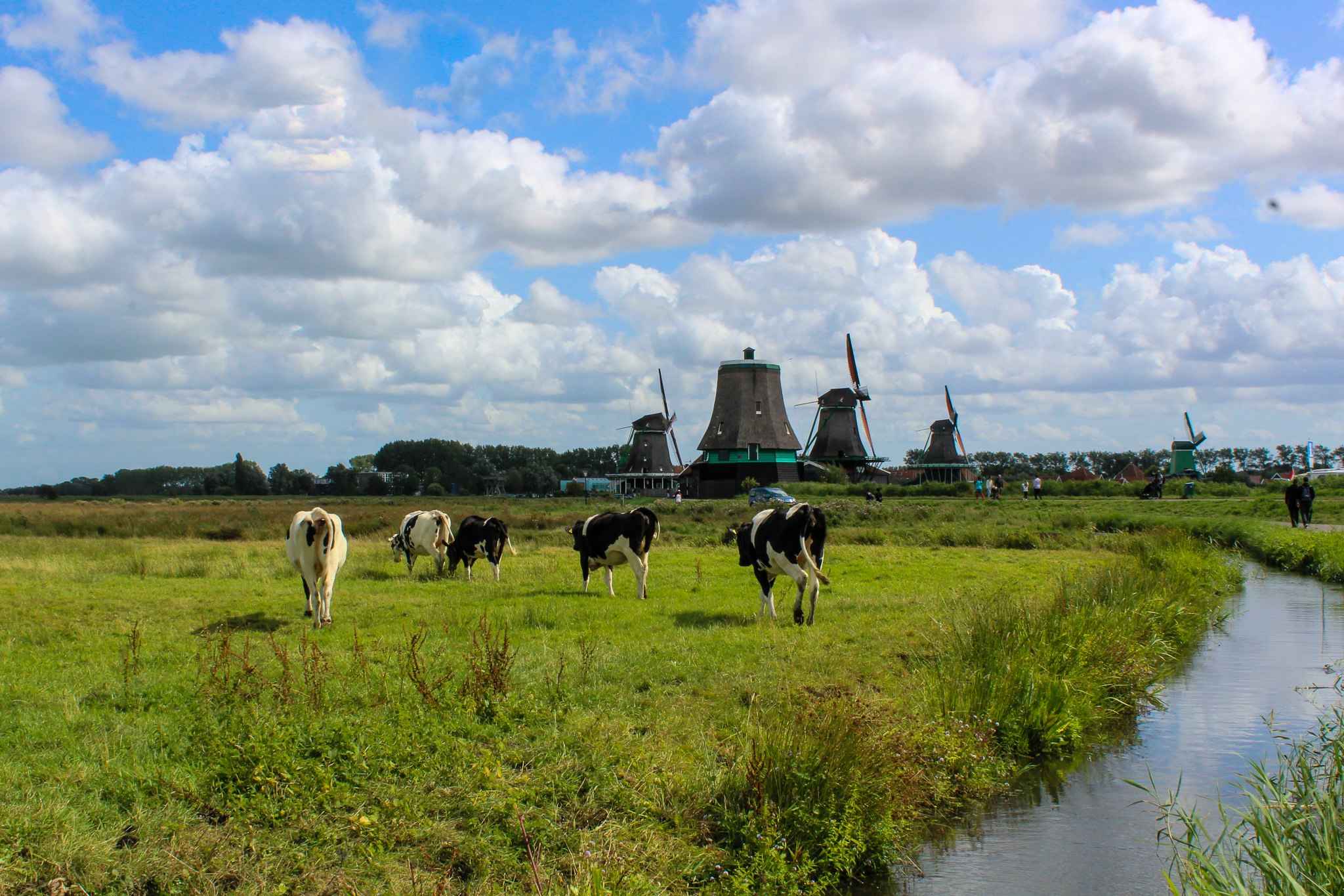 take a zaanse schans day trip and see the countryside