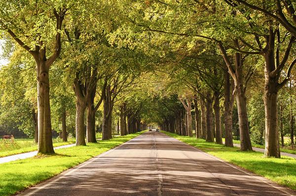 Asserstraat avenue