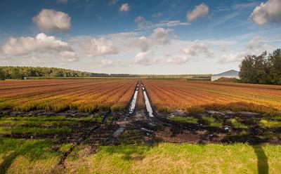 Farmland in Midden-Drenthe