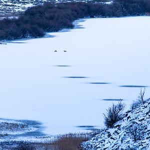 Foxes on a frozen Crag Lough