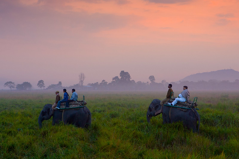 Looking for rhinos. Kaziranga National Park. Assam.