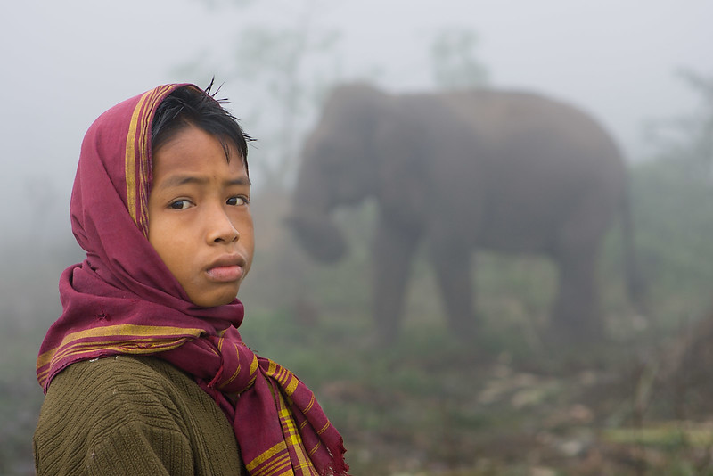 Young boy and elephant. Jagi Road. Assam.