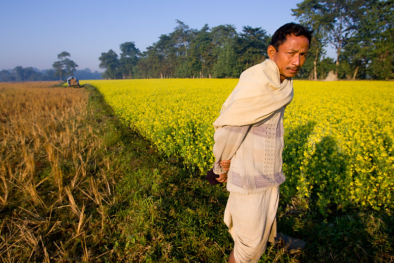 Majuli river island in the Brahmaputra river. Assam.