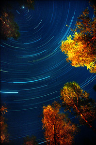 """Star Trails and Poplars"". A one hour long exposure of the night sky on the shore of White Pine Lake, Nolrthern Minnesota."