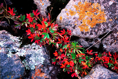 Lichen and Granite,