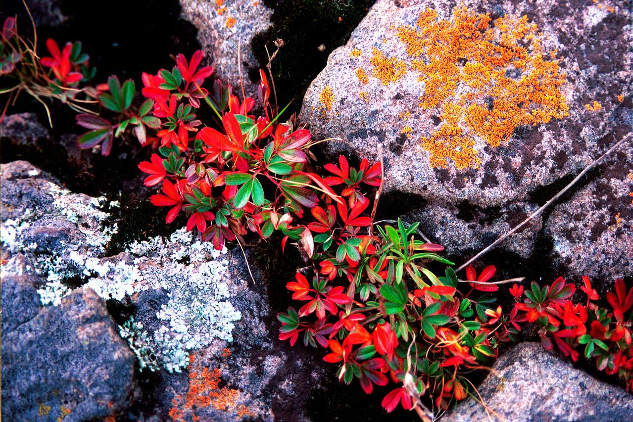Lichen and Granite,