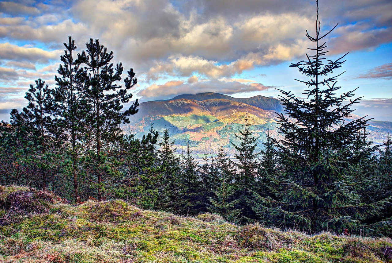 Whinlatter Top Road : Skiddaw Through The Trees