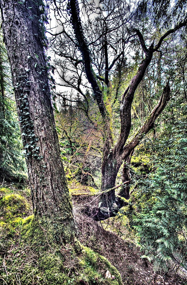 Trees Above The Comb Beck Dam